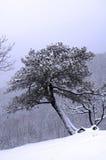 las śniegu Fotografia Stock