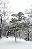 las śniegu Zdjęcie Royalty Free