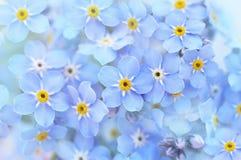 Las nomeolvides azules saltan ramillete de las flores fotos de archivo libres de regalías
