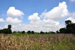 Las nubes en el cielo azul Fotografía de archivo