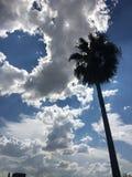 Las nubes forman un diámetro perfecto para caber una palmera Imagen de archivo libre de regalías