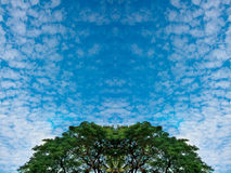 Las nubes minúsculas y el cielo verde enorme del árbol de abedul del follaje y azul en el bosque de la primavera en fondo de la n Fotos de archivo libres de regalías
