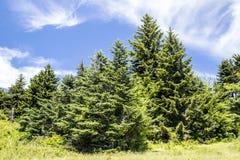 Las nubes rayan un cielo azul en Roan Mountain imágenes de archivo libres de regalías