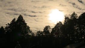 Las nubes ruedan encima el bosque oscuro del pino en Pennsylvania central debajo del sol de noviembre almacen de metraje de vídeo