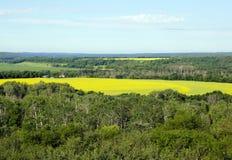 Las nubes sobre el canola amarillo colocan en Manitoba meridional Fotos de archivo libres de regalías