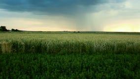 Las nubes tempestuosas son gris-azules sobre el campo con verano de la oscuridad de la puesta del sol del tiempo de la tarde del  almacen de metraje de vídeo