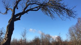 Las nubes video flotan en el cielo sobre el movimiento rápido del bosque almacen de video