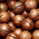 Las nueces de macadamia maduras se cierran para arriba fotografía de archivo libre de regalías