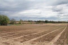 Las nuevas plantaciones estiraron hacia fuera en una granja grande en el extremo oriental de los Long Island Fotos de archivo