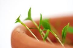 Las nuevas plantas nacen fotos de archivo