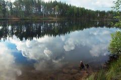 Las odbijał w załzawionej powierzchni jezioro, pokój i zaciszność przejrzyści, obraz royalty free