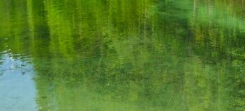 Las odbija w jasnej wodzie obraz stock