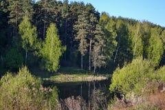 Las odbija w spokojnej błękitne wody lasowy jezioro piękna nad ptak chmur kolory muchy złota charakter wcześnie rano zwiększa mor Obraz Royalty Free