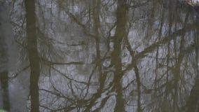 Las Odzwierciedlający w rzeki powierzchni tle zbiory