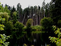 Las odzyskujący po huraganu Zdjęcia Royalty Free