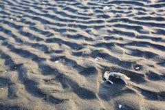Las ondulaciones de la arena Foto de archivo libre de regalías