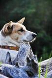 Las opiniones del perro a través imagen de archivo