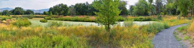 Las opiniones Jordan River Trail con los árboles circundantes, la aceituna rusa, el cottonwood y el légamo llenaron el agua fango imagen de archivo libre de regalías