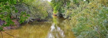 Las opiniones Jordan River Trail con los árboles circundantes, la aceituna rusa, el cottonwood y el légamo llenaron el agua fango imagen de archivo