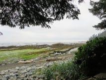 Las opiniones a lo largo de las playas remotas de la costa oeste de la isla de Vancouver en el alza famosa del rastro de la costa fotografía de archivo