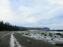 Las opiniones a lo largo de las playas remotas de la costa oeste de la isla de Vancouver en el alza famosa del rastro de la costa imagenes de archivo