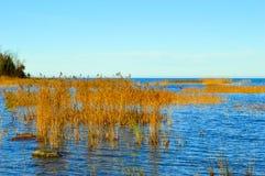 Las orillas del lago Hurón Imágenes de archivo libres de regalías
