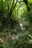 Las orillas rocosas de un pequeño río de la montaña en un bosque verde fotografía de archivo