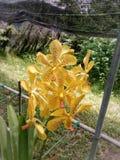 Las orquídeas foto de archivo libre de regalías