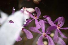 Las orquídeas violetas púrpuras flotan en la charca con reflejan de la luz en el mediados de día imagen de archivo