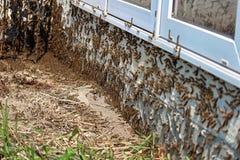 Las orugas suben debajo de una ventana durante una infestación foto de archivo