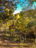 Las osiki w Lee Vining obrazy stock