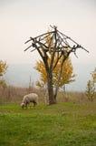 Las ovejas Imagen de archivo