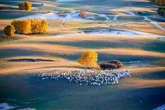 Las ovejas blancas en el prado Imagenes de archivo