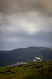 Las ovejas de la colina acercan al cloudline imagen de archivo