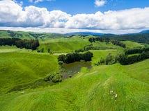 Las ovejas de la visión aérea cultivan la colina, Rotorua, Nueva Zelanda Fotografía de archivo