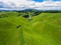 Las ovejas de la visión aérea cultivan la colina, Rotorua, Nueva Zelanda Foto de archivo libre de regalías