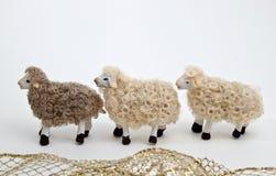 Las ovejas del pesebre Fotos de archivo libres de regalías