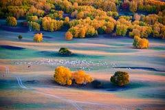 Las ovejas en la puesta del sol de los prados del otoño Fotos de archivo
