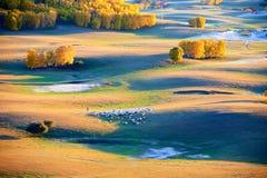 Las ovejas en la puesta del sol de la pradera de la caída Fotografía de archivo libre de regalías