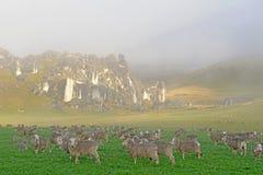 Las ovejas recolectan en un prado en la colina del castillo Imágenes de archivo libres de regalías