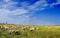 Las ovejas se reúnen y cielo azul Fotografía de archivo