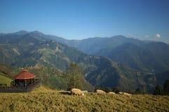 Las ovejas viven en montaña Fotografía de archivo libre de regalías