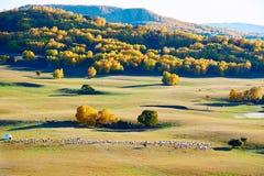 Las ovejas y el bosque en los prados Foto de archivo libre de regalías