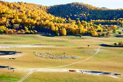 Las ovejas y el bosque en el prado Fotos de archivo