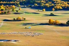 Las ovejas y el Ger en la puesta del sol de la estepa Imagenes de archivo