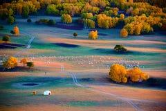 Las ovejas y el Ger en la puesta del sol del prado Fotografía de archivo libre de regalías