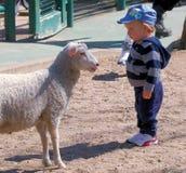 Las ovejas y el niño miran fijamente abajo Fotos de archivo