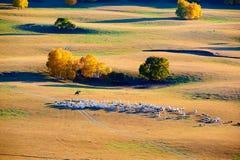 Las ovejas y la manada en la puesta del sol del prado Fotografía de archivo libre de regalías