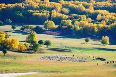Las ovejas y las visitas en la pradera Imagen de archivo
