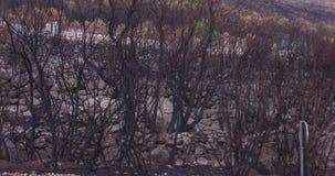Las palący puszek pożarem lasu zdjęcie wideo